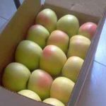 Apple fruit selling company
