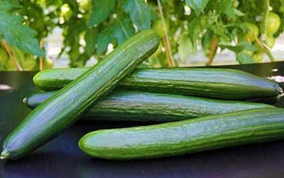 wholesale price of cucumbers