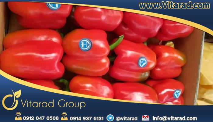 Iranian bell peppers are very popular worldwide