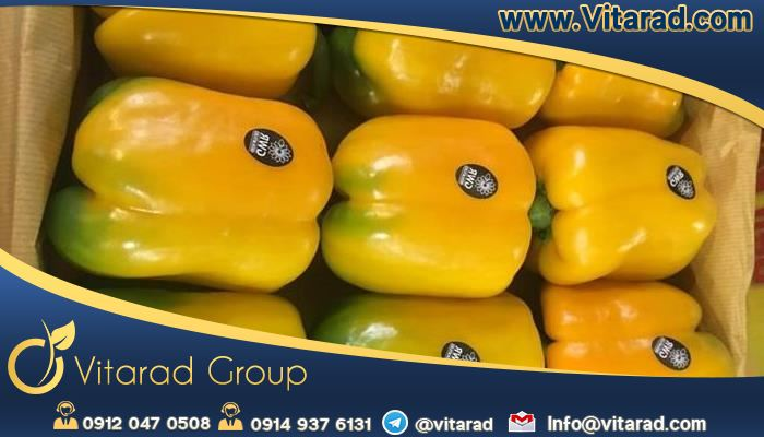 Bell pepper export of Isfahan