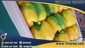 Iranian bell pepper market price
