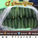 cucumber export from iran