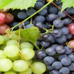 Exporting grapes of Iran