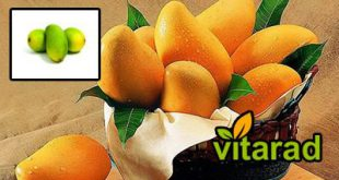 Import mango from Thailand