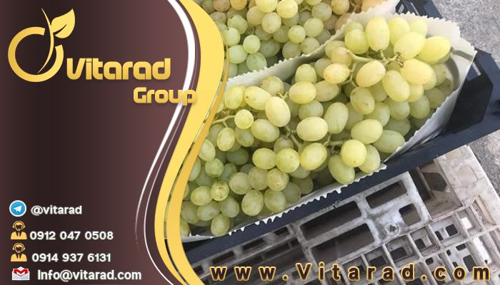 Export of grape from Iran