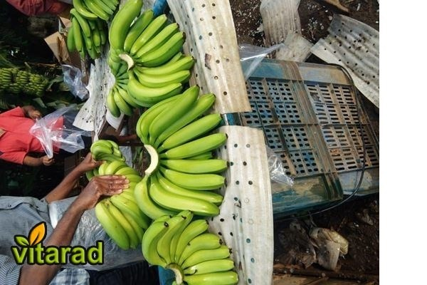 Banana Export and Import Company