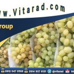 Wholesale Iranian seedless grapes