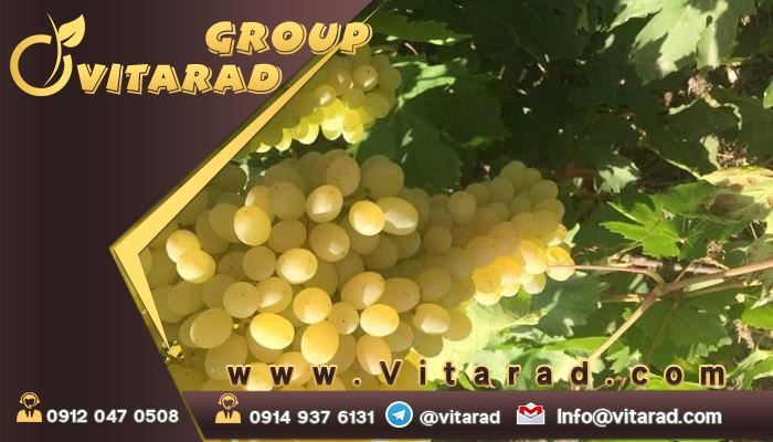 Different grape types in Iran