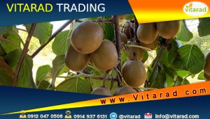 Export of red kiwi to Europe